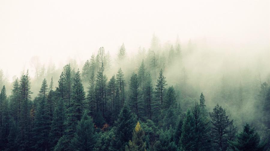Вечнозеленый контент: как сделать ваши статьи еще более популярными