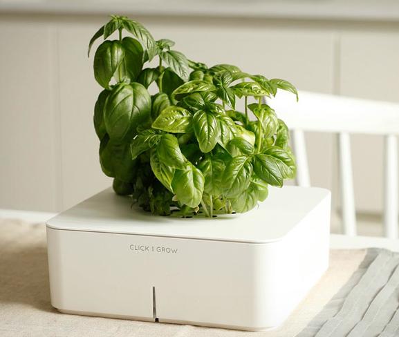 Продвижение стартапа по продаже «умных» цветочных горшков — смартпотов Click and Grow